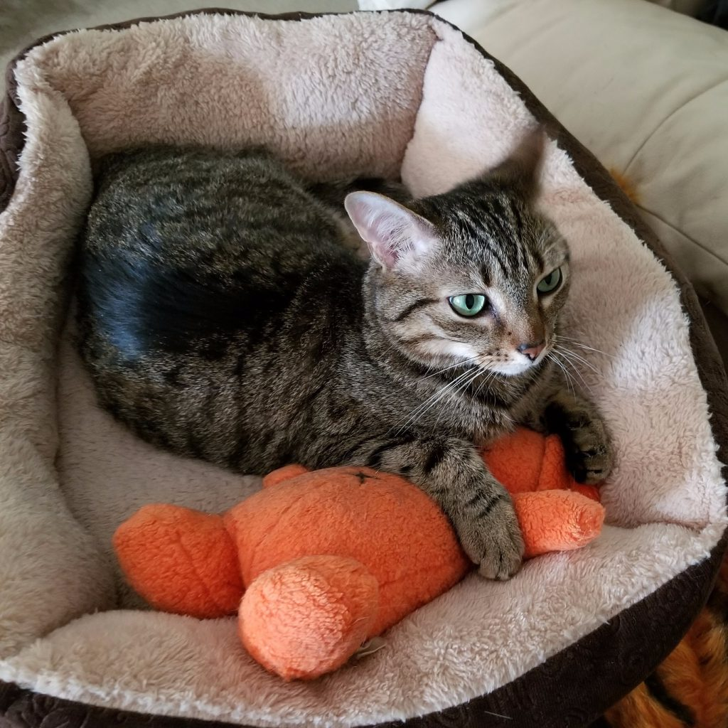 Gabby The Tabby in her bed with Doggy