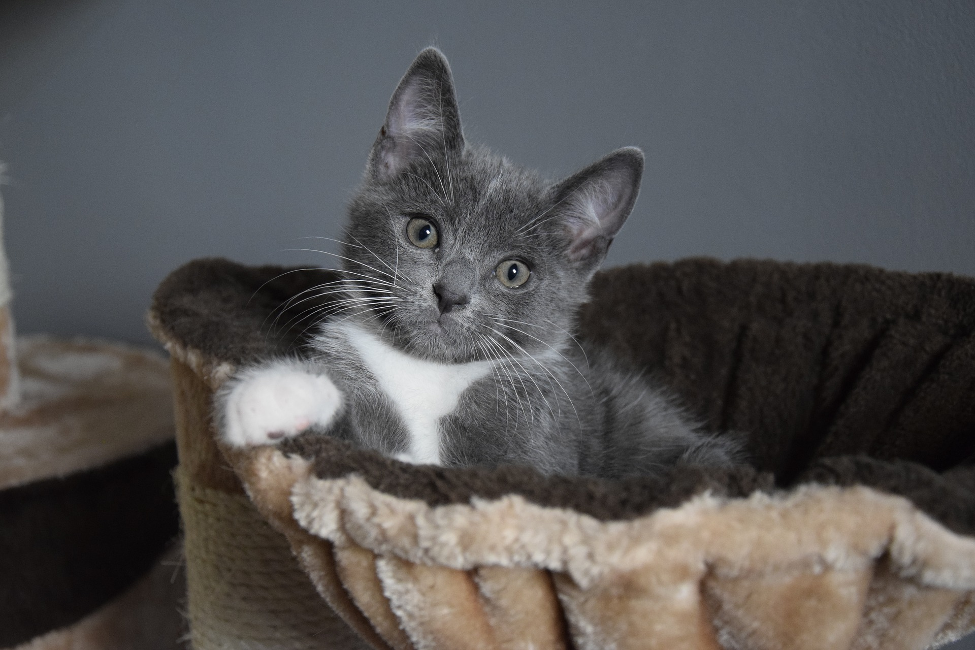 6 Hacks To Make Your New Kitten Feel At Home